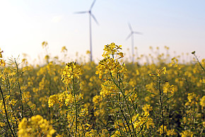 Bio fuel and wind-mill