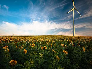 Windmill in sunflower field